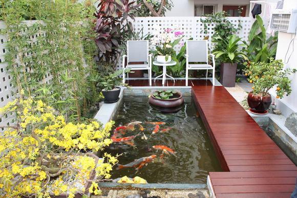 11 - Kinh nghiệm làm hồ cá koi trên sân thượng